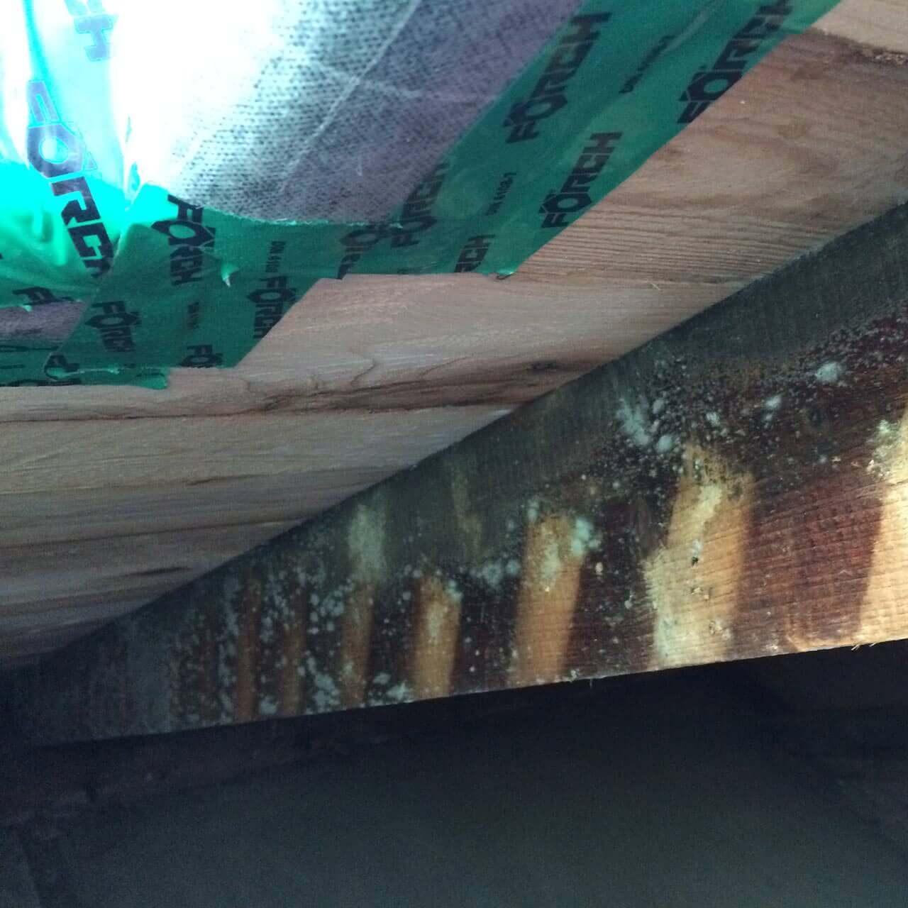 klima center schimmel dachboden - Schimmel Beseitigung