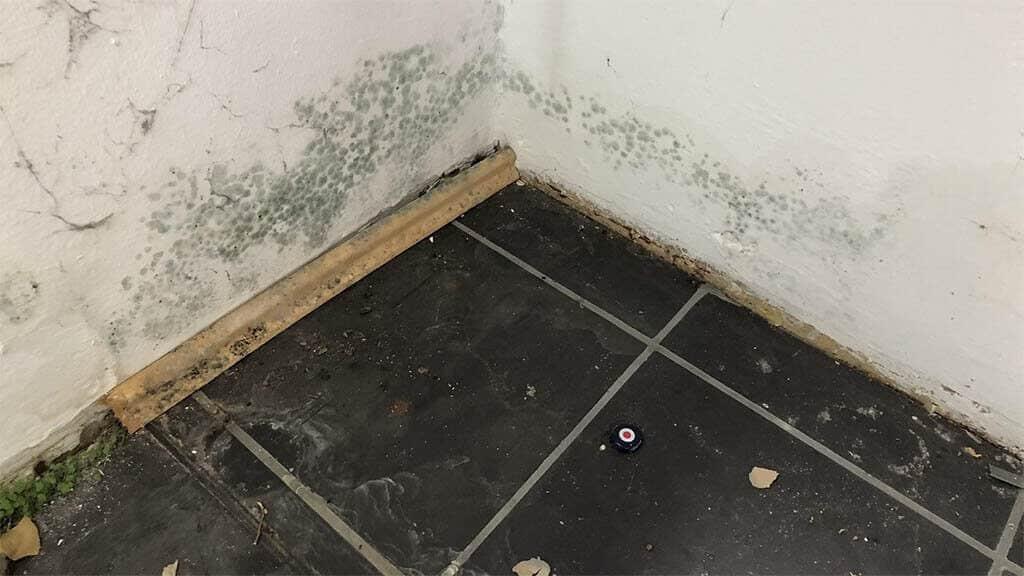 Feuchtigkeit im Keller Schimmel organisches Wachstum 1024x576 - Feuchtigkeit im Keller - Ursachen und Beseitigung